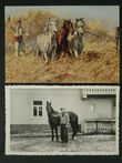 97483 / 0 - Picture Postcards / Theme / Pets, Countryside, Outdoor