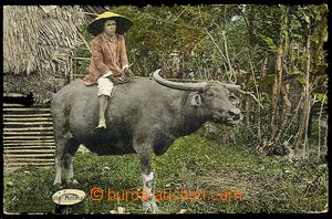 23724 - 1910 FILIPINY  cow with Native, tinted photo, Us, light bump