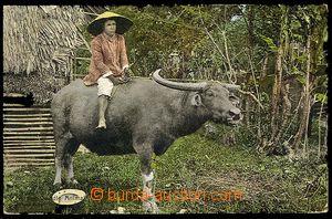 23724 - 1910 FILIPINY  kráva s domorodcem, kolorované foto, prošl