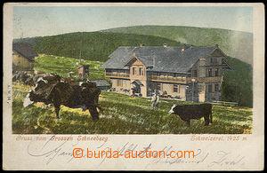 32112 - 1902 KRÁLICKÝ SNĚŽNÍK - barevná, krávy nad chatou, DA