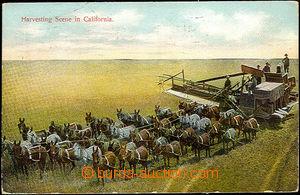 36123 - 1909 USA California, sklizeň pomocí kombajnu taženého 38