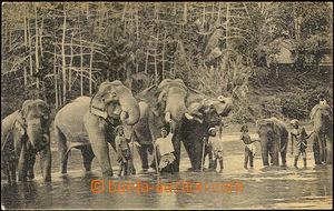 36136 - 1900? Elephants, COLOMBO,  B/W postcard,  Elephants near/in/