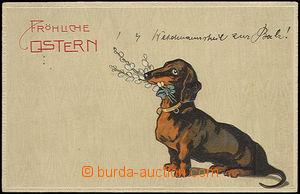 48895 - 1908 pes, jezevčík na velikonoční pohlednici, tlačená;