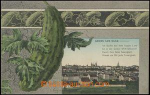 67096 - 1908 Žatec (Saaz) - koláž okurka; prošlá, luxusní